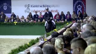 Tolegro v. Totilas - Krack C / Hengstvorführung Vechta 2015 / Böckmann Pferde