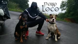 Perro Loco- uribarri tu peor paranoia