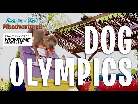Benson & Gio's Misadventures Ep. 4 - Dog Olympics
