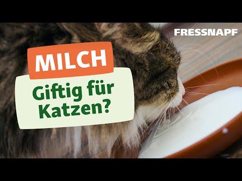 Warum sollten Katzen keine Kuhmilch trinken?