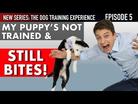 Episode 5: I've Had My Puppy 6 Days and She's NOT TRAINED! (Housetraining,Socialization & More)
