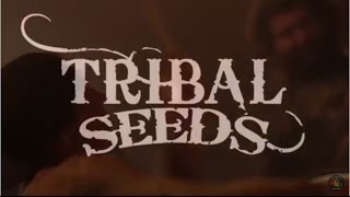 Tribal Seeds Joins Sublime & Dirty Heads On Tour (Summer 2016)
