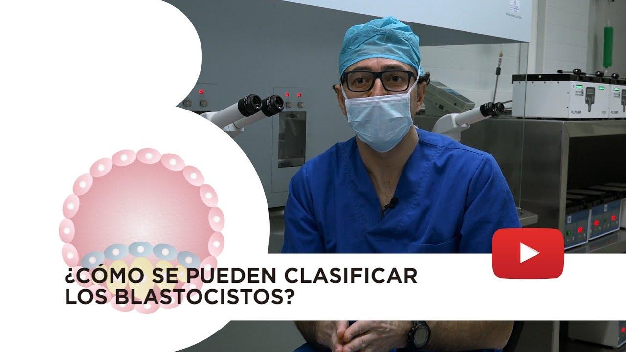 Embrión blastocisto: tipos y clasificación conforme su calidad