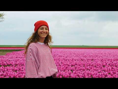 Flevoland | Holland photo