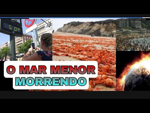 Espanha bate recorde calor com temperaturas de 47 graus e milhares de animais marinhos estão morrendo