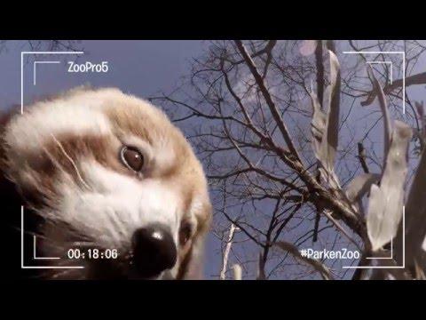 Djuren sköter snacket: Behind The Scenes