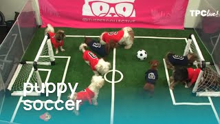 TPC Live! Puppies Play Soccer (Pup Cup 2019)   The Pet Collective