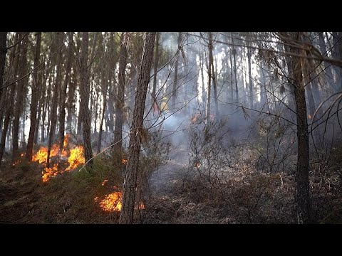 Could climate data help beat wildfires?