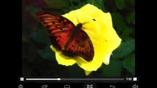 $-The Automn Leaves'-Indila-Feuille D'automne-English-Lyrics-Translate-Anaser Duduianu-fm-music