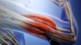 Agonist and Antagonist Muscle Movement Explanation