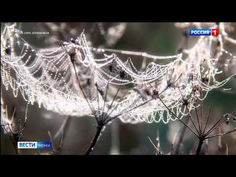 Сияние росы на паутине