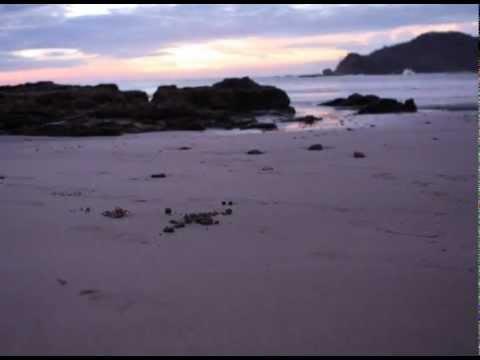The great hermit crab migration of playa Majagual, Nicaragua