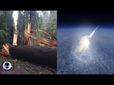 WHAT Knocked These Trees Down?