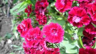 video-FLORES-ONIS