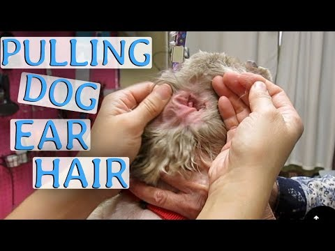 How to Clean Your Dog